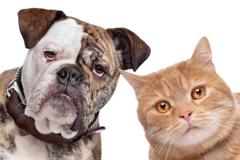 Fleas Ticks Threat dog and tabby cat