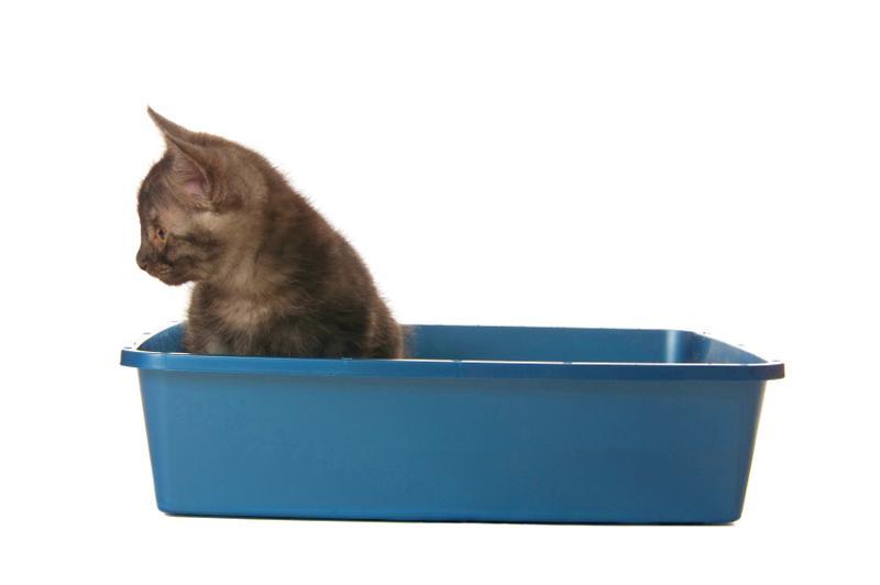 stop feline urinary tract problems kitten blue litter box